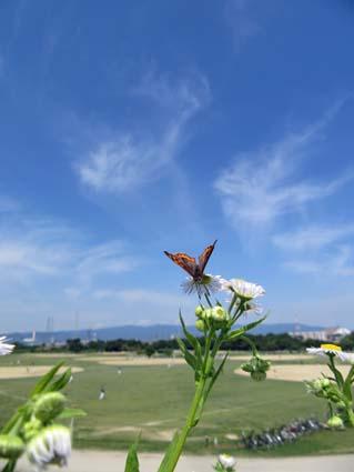 のんびりと-5(201580603).jpg