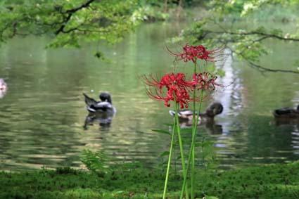 のんびり植物園-6(20170930).jpg