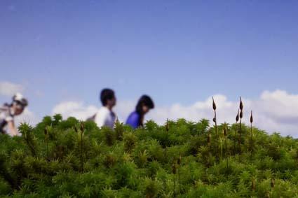 スナゴケと景色-1(20170209).jpg