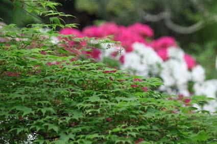 万葉植物園-11(20170506).jpg