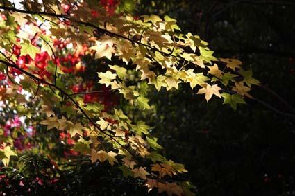 中央公園の紅葉-2(20161111).jpg