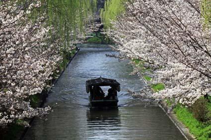 十石舟と桜-1(20170404).jpg