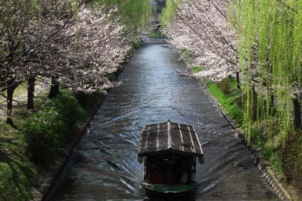 十石舟と桜-2(20170404).jpg