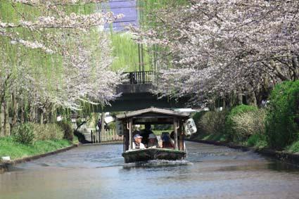 十石舟と桜-3(20170404).jpg