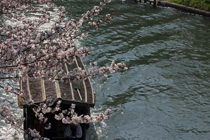 十石舟と桜-5(20170404).jpg
