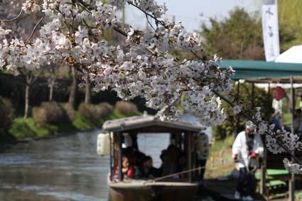 十石舟と桜-6(20170404).jpg