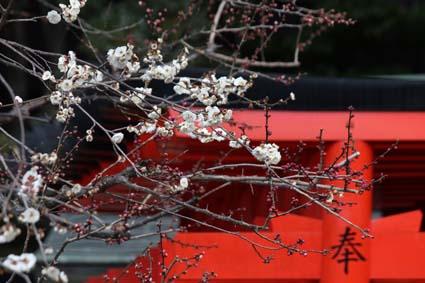 天満宮の梅の花-7(20170225).jpg