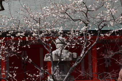 天満宮の梅の花-8(20170225).jpg