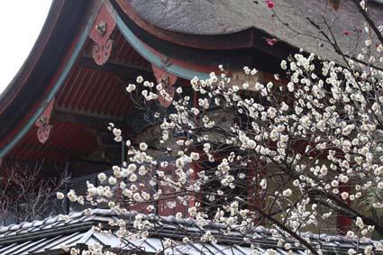 御香宮の梅-1(20170218).jpg