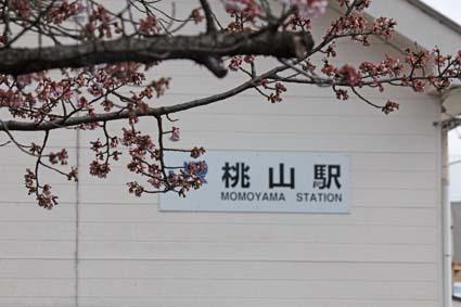 桃山駅前の桜-1(20170218).jpg