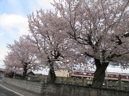 桜-1(20170412).jpg