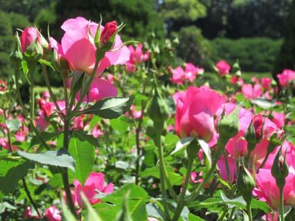 植物園-10(20170519).jpg