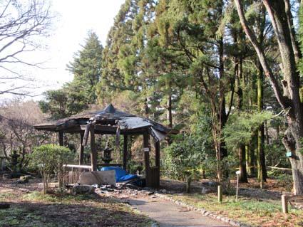 植物園-12(20180109).jpg