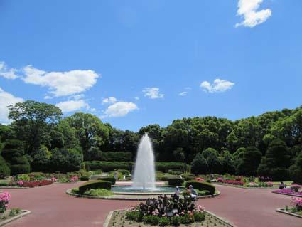 植物園-1(20170605).jpg