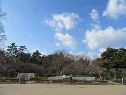 植物園-5(20180109).jpg