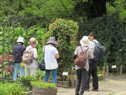 植物園-6(20170714).jpg