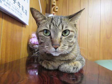 猫-1(20170311).jpg
