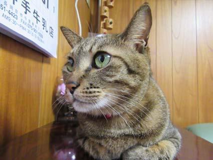猫-2(20170311).jpg