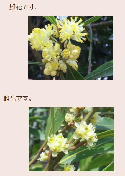 雄花と雌花.jpg