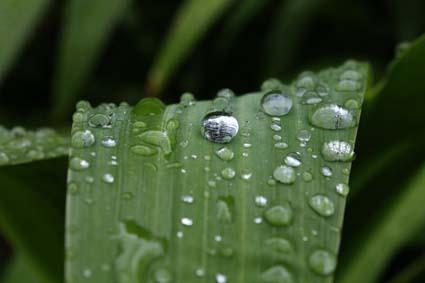 雨の植物園-10(20170630).jpg
