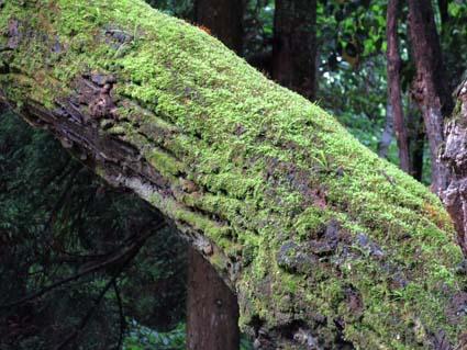 雨の植物園-14(20170525).jpg