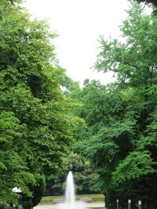 雨の植物園-15(20170525).jpg