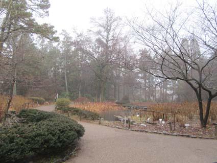 雨の植物園-1(20180117).jpg