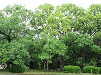 雨の植物園-2(20170525).jpg