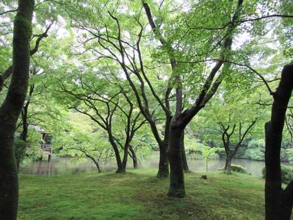 雨の植物園-2(20170630).jpg