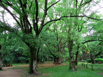 雨の植物園-4(20170525).jpg