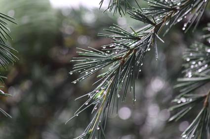 雨の植物園-8(20170630).jpg
