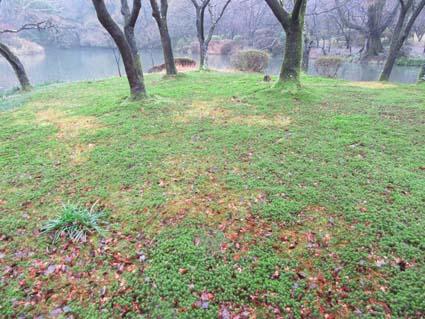 雨の植物園-8(20180117).jpg