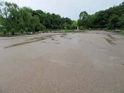 雨の植物園-9(20180606).jpg