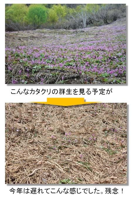 高山植物園-21(20170429).jpg