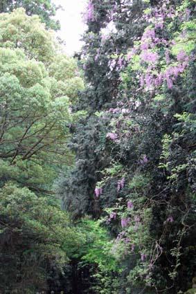 万葉植物園-14(20170506).jpg