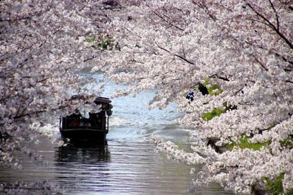 十石舟とさくら-1(20190403).jpg