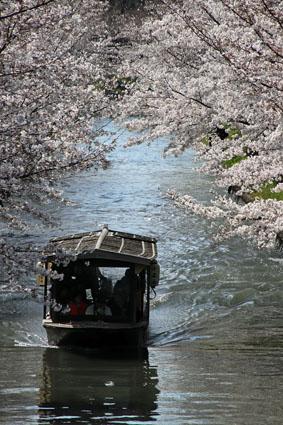 十石舟とさくら-3(20190403).jpg