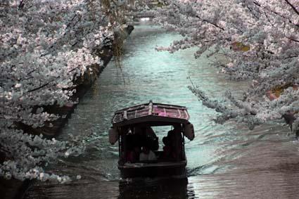 十石舟と桜-10(20180327).jpg