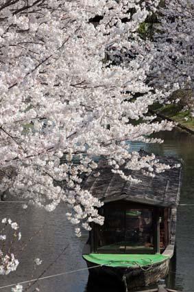 十石舟と桜-4(20180327).jpg