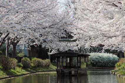 十石舟と桜-5(20180327).jpg