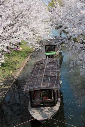 十石舟と桜-7(20180327).jpg