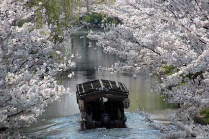 十石舟と桜-8(20180327).jpg