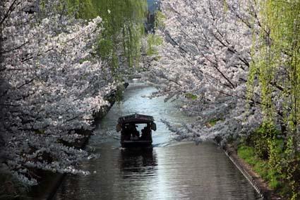 十石舟と桜-9(20180327).jpg