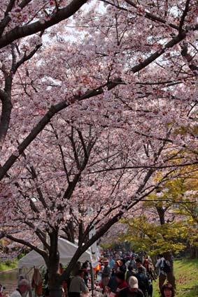 十石舟と桜まつり-10(20180401).jpg