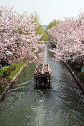 十石舟と桜まつり-1(20180401).jpg