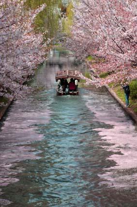 十石舟と桜まつり-6(20180401).jpg
