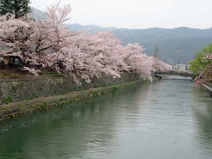 岡崎の桜-2(20190414).jpg