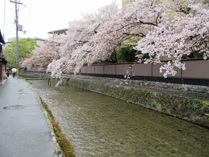 岡崎の桜-5(20190414).jpg