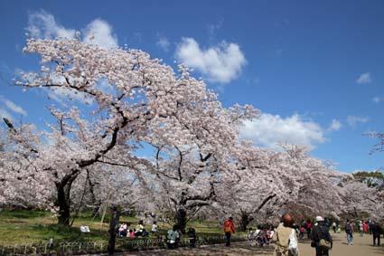 桜-1(20190409).jpg