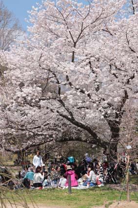 桜の木の下-2(20180328).jpg